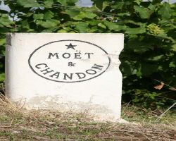 Mo�ts grapes grow on the hill above Cumier�s